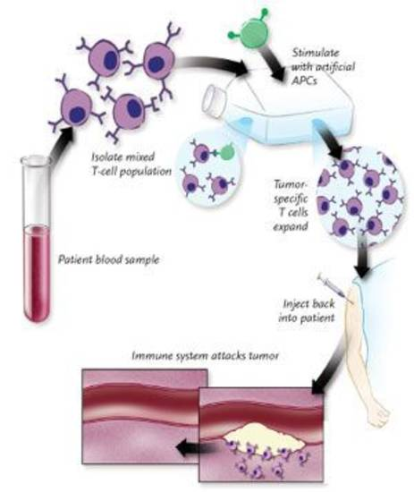 monoclonal antibodies research paper Monoclonal antibodies infusion reactions: etiology  the purposes of this paper are to was utilized using research key words, monoclonal antibodies.