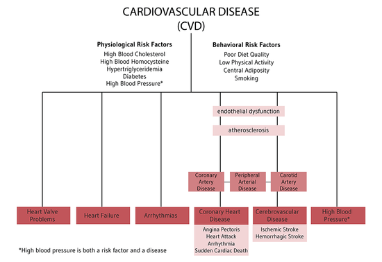 cardiovascular risk factors Coronary heart disease risk factors are conditions or habits that raise your risk of coronary heart gaps in the cardiovascular lipid and risk assessment guidelines.